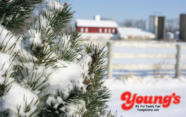 Young's Gift Cards - Christmas Tree Design