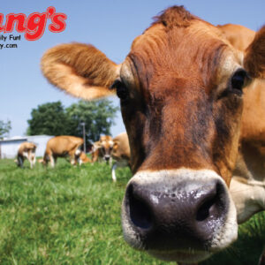 Young's Gift Cards - Jersey Cow Design