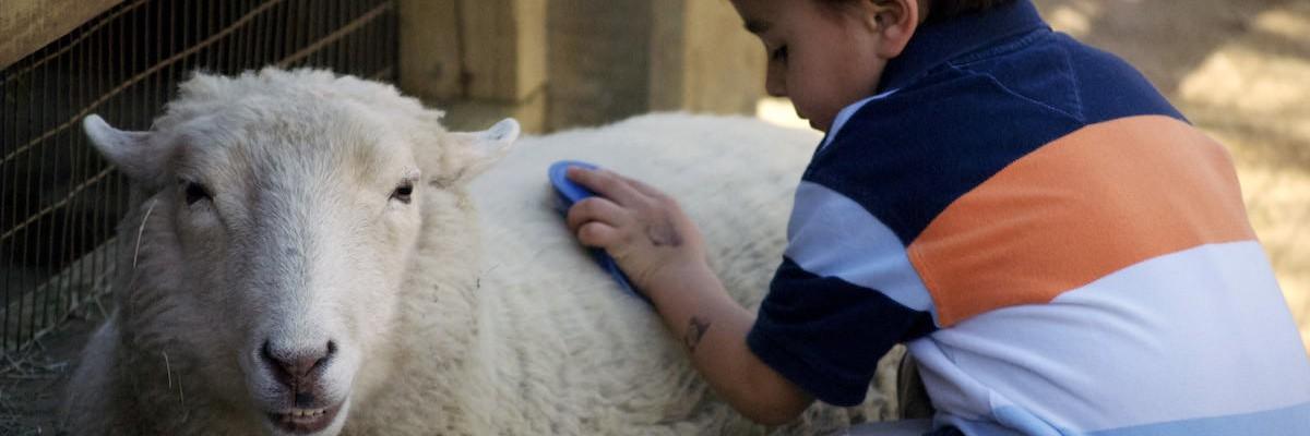 wool-gathering